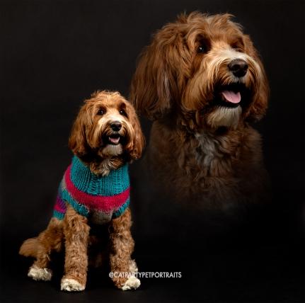 20190511_Pet Portrait_Danielle Spires-8525 copy