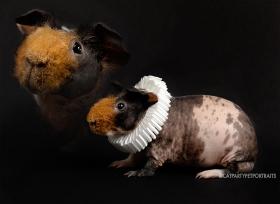 20190512_Pet Portraits_Danielle Spires-8953 copy